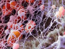 плазма крови в организме